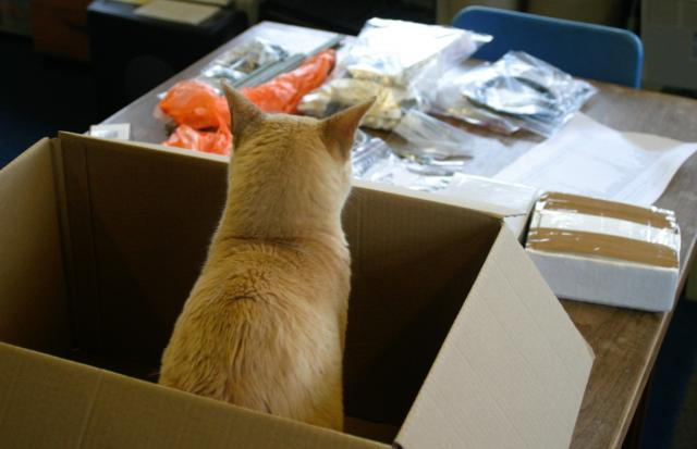 miaow--now-that-i-unpacked-the-box--what-next.jpg